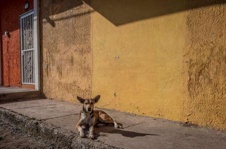 San Blas, Mexico dog.