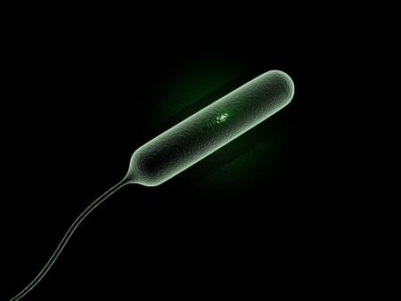 Digital illustration of coli bacteria in 3d on digital background illustration