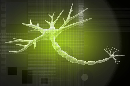 Human neuron cell  Stock Photo - 8008891