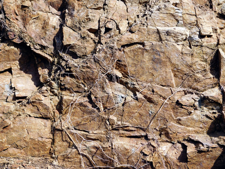Texture of rock and root