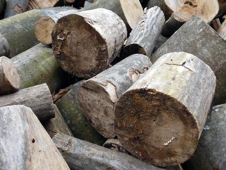 Bunch of beech cut logs