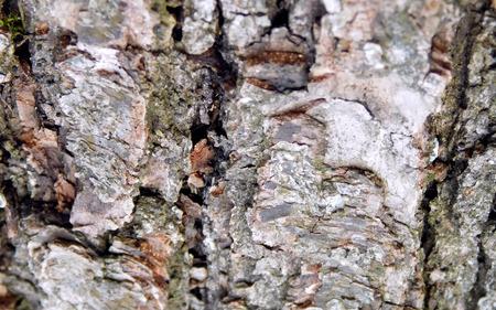 Oak bark texture Banco de Imagens