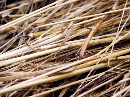 Laid straw texture