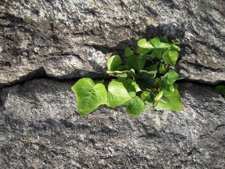 Plant on cracked stone Banco de Imagens