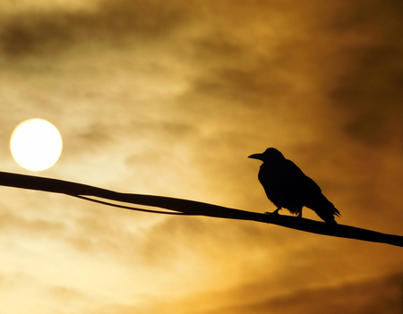 After storm, raven on a wire looking into the sunset Banco de Imagens