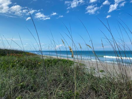 Sea oats  overlooking the beach and ocean on a beautiful sunny day along the shoreline on North Hutchinson Island