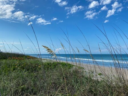 Sea oats  overlooking the beach and ocean on a beautiful sunny day along the shoreline on North Hutchinson Island. Imagens