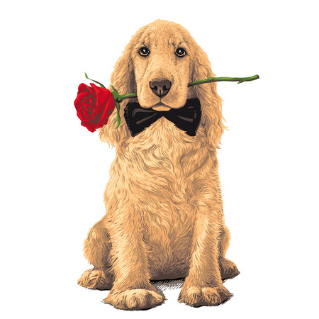 Golden Cocker Spaniel Dog sitting with a red rose in his meht Illustration