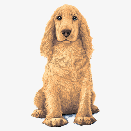 Golden Cocker Spaniel dog. Sitting