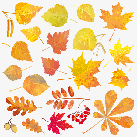 Fall decor leaves collection isolated on white. Autumn. Vector illustration.