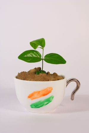 a small plant growing in a tea cup with indian flag colors photo