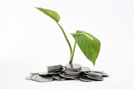 rupee: a growing money plant in coins Stock Photo