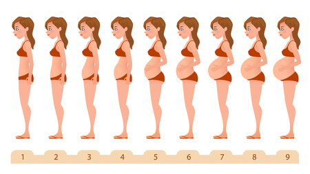 Beautiful pregnant woman. Silhouettes for medicine pregnancy infographics. Monthly pregnancy. Vector illustration. Banque d'images
