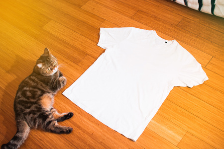 white t shirt and tabby cat on wood floor, mock up, free space