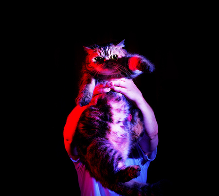 A man is holding his domestic cat in his hands on a black background, in neon light