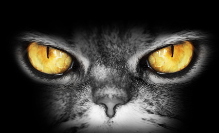 rudeness: dark portrait of a cat with yellow eyes, looks into the  camera, a dangerous evil look, owl