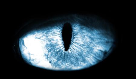 blauw macro kattenoog op zwarte achtergrond Stockfoto