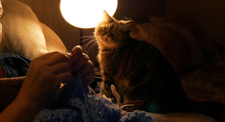 woman knits a lock at home, a cat on a background of a woman, a homemade hobby