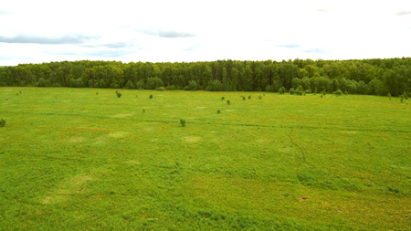 empty green field on the background of the forest, photo from the drone, aerial view
