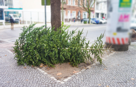 Throw away fir tree or christmas tree after new year, discarded christmas tree Фото со стока