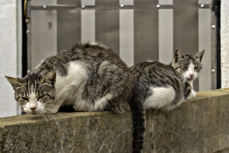 Cats resting on the wall 写真素材