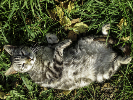 cat resting on the grass