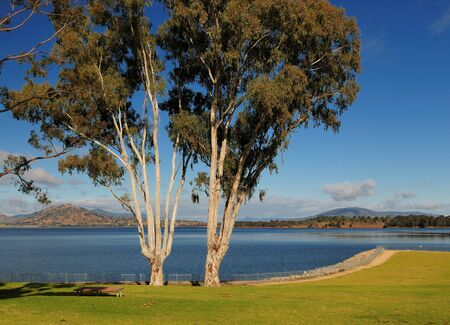 Picturesque Pair Of Trees On The Shore Of Lake Hume NSW Australia