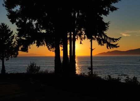 Enchanting Sunset Behind A Couple Of Trees At Stanley Park In Vancouver 스톡 콘텐츠