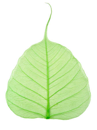 green leaf Stock Photo - 891815