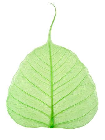 green leaf Stock Photo - 891815