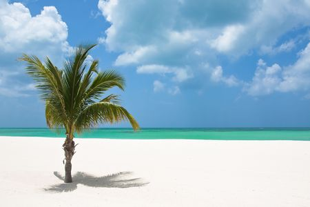 palm tree on white sandy beach photo