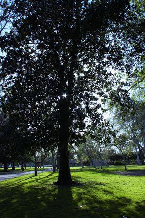 shady: Shady Tree