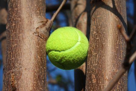 Tennis Ball Stuck in Tree Фото со стока