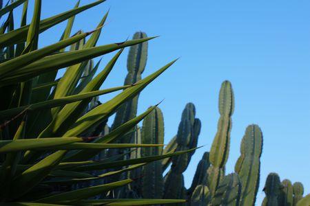 plantas del desierto: Las plantas del desierto
