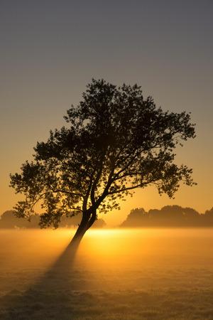 mood moody: Moody sunrise above a misty meadow near Sliedrecht in the dutch region Alblasserwaard Stock Photo