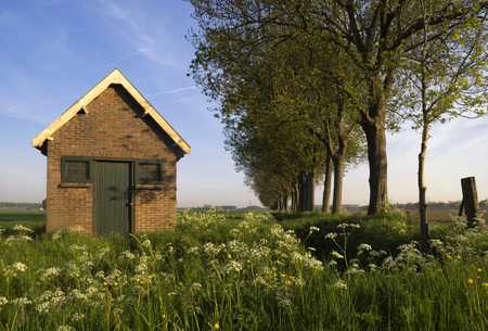 dordrecht: Shed near Dordrecht surrounded by wild flowers