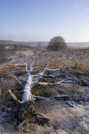 posbank: Fallen tree near the Posbank