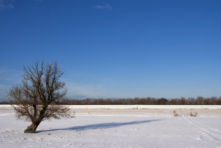 Winter landscape in the Biesbosch Stock Photo