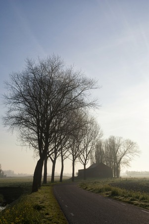 Row of trees near Hank 写真素材