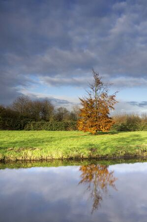 Autumn coloured tree
