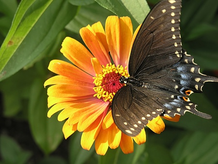 A butterfly located on a flower