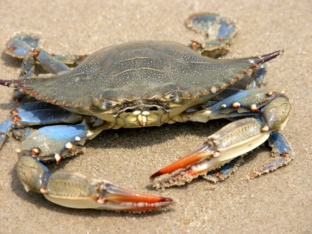 A crab on a sandy beach