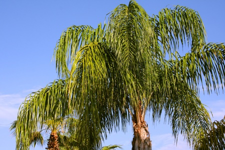 A palm tree on a blue sky