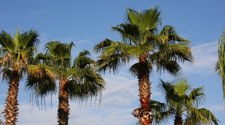a picture of palm trees in the sun Stock Photo