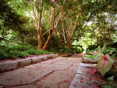 A pathway through a woodland garden in summer  Stock Photo