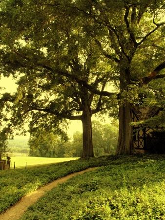 A lush summer garden path in Virginia Standard-Bild