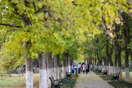 treelined: The tree-lined