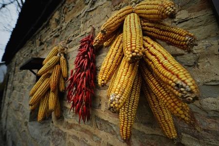 fruitage: Harvest