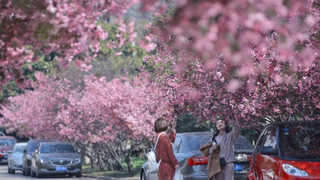 wen: flower blooming and visitor at park