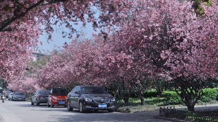 공원에있는 베고니아 스톡 콘텐츠 - 75602386
